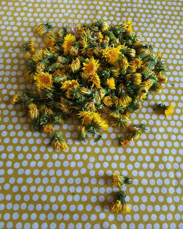 Dandelion honey by Vanessa Winship