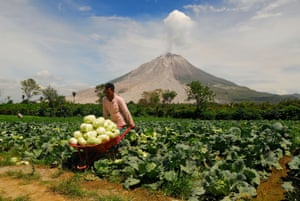 A farmer harvests crops as volcanic ash shoots out of Mount Sinabung in Sumatra, Indonesia