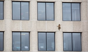"""""""The animal scaling the UBS Plaza building"""""""