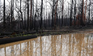 burnt trees reflected in a puddle of muddy water
