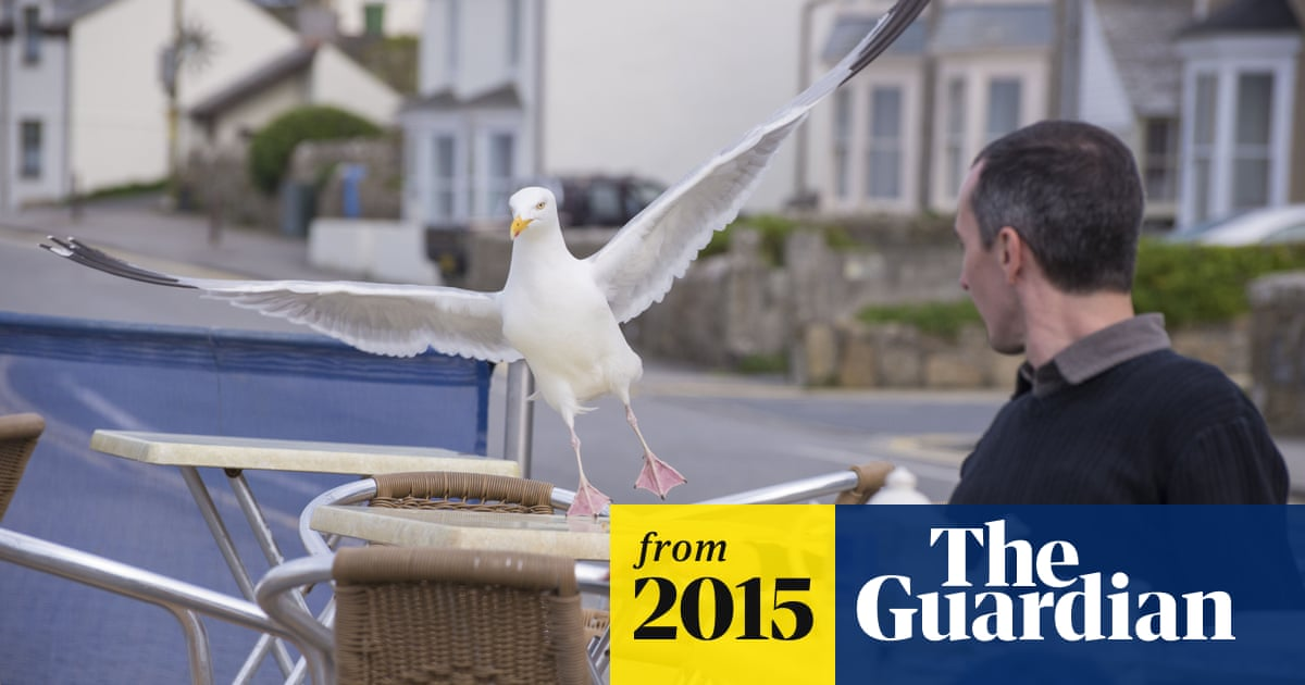 Killer' seagulls top the pecking order for a media frenzy