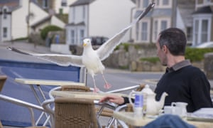A gull swoops on a cafe