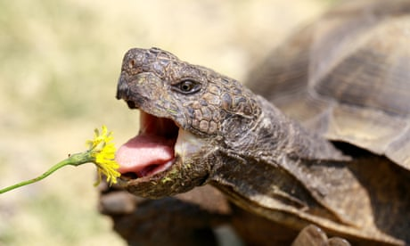 Tim Dowling: my wife's gone to war with the tortoise. He's winning