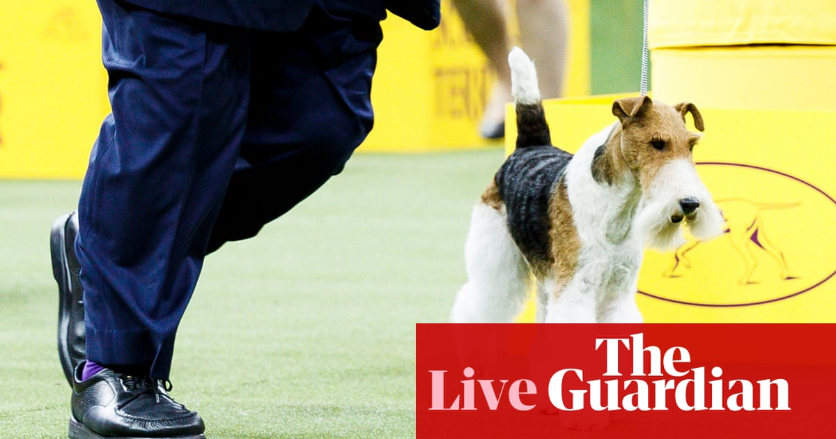 King the wire fox terrier named Westminster's Best in Show – as it happened