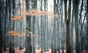 Autumn trees in Surrey