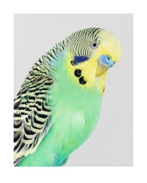 Celery. Photograph on archival fibre-based cotton rag paper, 2019 (112 x 89cm).
