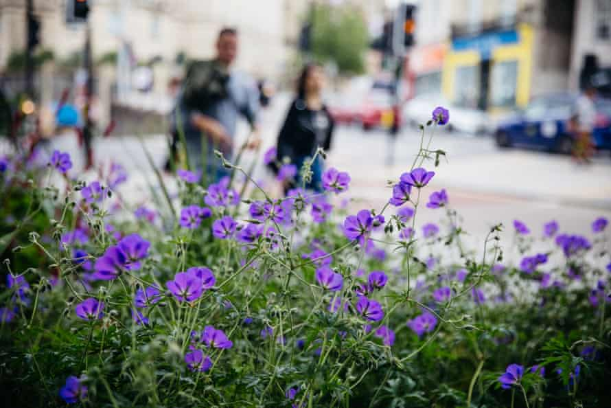 Flowers planted in Bristol Harbourside as part of an urban project
