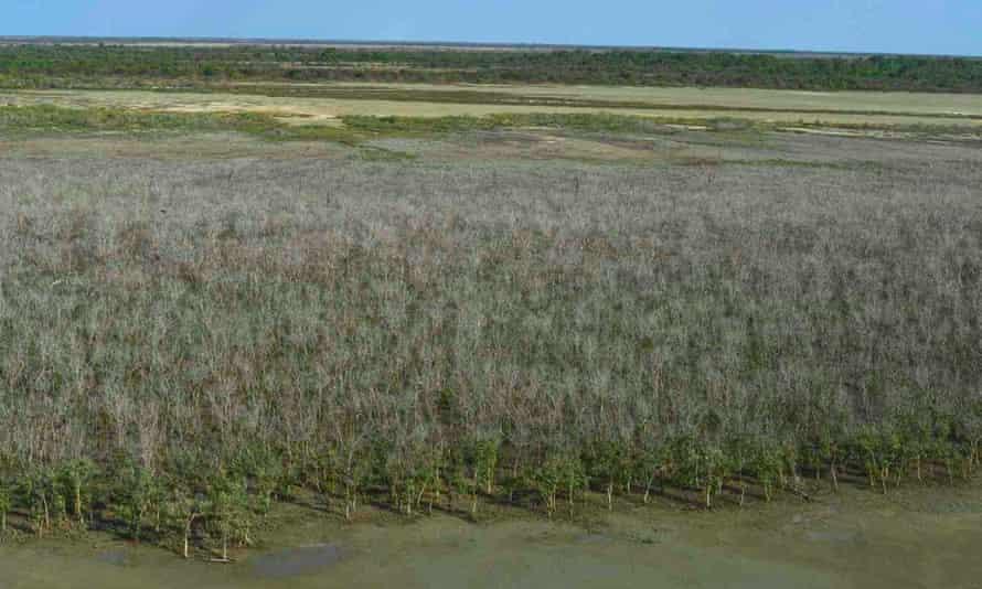 Aerial view of severe mangrove dieback near Karumba in Queensland, October 2016.