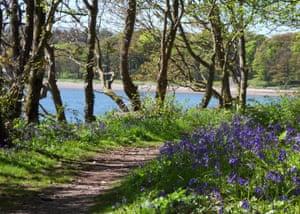 Coastal path through woods at Pavillion Cottage, Scotland
