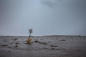 A lioness picks her way between 'islands' on the flooded Kenyan Masai Mara