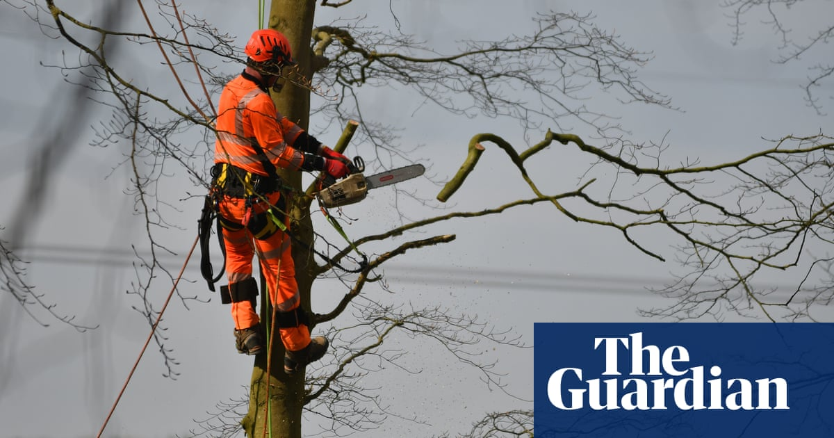 Court overturns ban on HS2 tree felling brought in over fears for rare bat