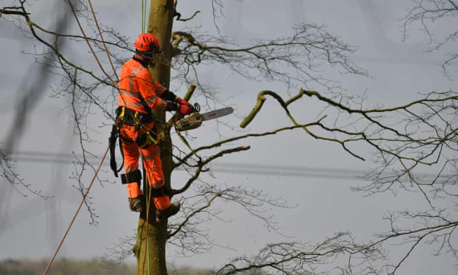 HS2 workers carry out tree felling at Jones' Hill Wood earlier this month.