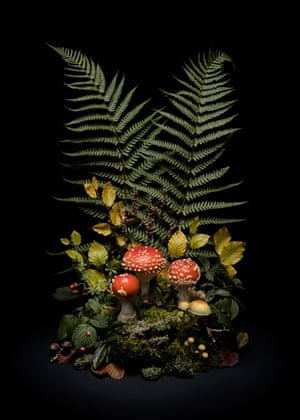 Dark Flora, Fly agaric, 2020Alongside the night-scapes is a set of images entitled 'Dark Flora'. These are still life arrangements of natural flora foraged from local woodlands. Atmospherically lit, they are reminiscent of old museum exhibits.Each arrangement was collected from within approximately one square kilometre of land and are season-specific: May foxgloves; verdant midsummer mares tail; poisonous autumnal fungi; and dried, skeletal winter remnants. Goodall stresses the importance of using everyday flora like bramble, and other hedgerow natives, encouraging us to appreciate the natural beauty of plants so often overlooked in the everyday. They are a seasonal celebration of British wild flora.