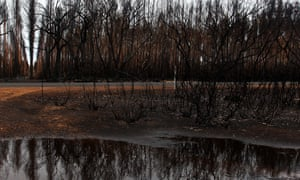 burnt trees reflected in a pool of rainwater