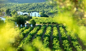 Independent by nature: vineyards in Catalonia.
