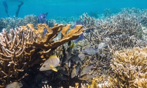 Coral reefs in Laughing Bird Caye.
