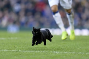 February 2: A black cat runs onto the pitch during the Premier League match between Everton and Wolverhampton Wanderers at Goodison Park.