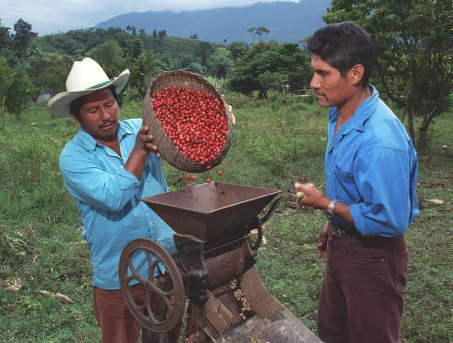 Workers de pulp organic coffee in Ejido San Luis. This coffee is shade grown in the Lacandon rainforest.