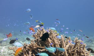 Multiple fish in coral reef