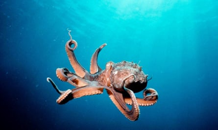 One of the worst ways for an animal to die is being chewed to death while still alive. This practice is particularly common with aquatic animals like fish and octopus.
