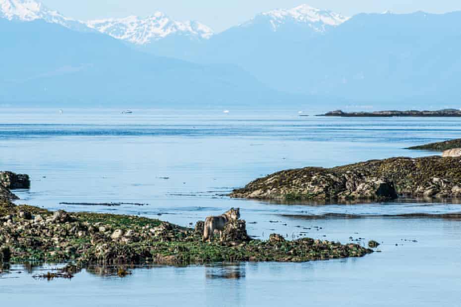 Takaya at the edge of Vancouver Island