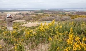 Purbeck Heath in Dorset. Seven landowners are joining forces to create what they are billing as the UK's first 'super national nature reserve'.