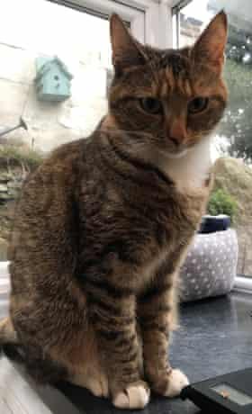 Minnie the cat.