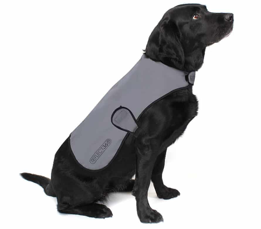 Now you see me: Proviz's reflective dog coat