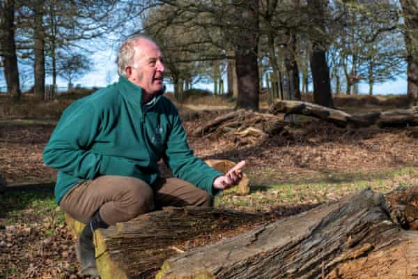 Simon Richards, manager of Richmond Park. 'You're planting trees thinking, what's that tree going to be like in 400 years' time?'