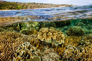 Situated in the heart of the 'coral triangle', Timor-Leste's waters host some 400 reef-building coral species, comparable to that of Australia's Great Barrier Reef.