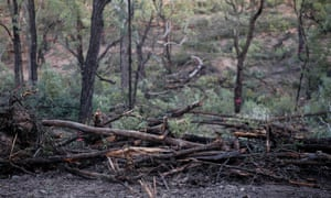 Leard State Forest trees