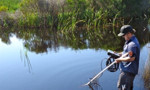 New South Wales Department of Planning, Industry and Environment officer collecting data at Bengello near Batemans Bay