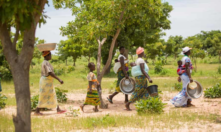 Women collect fallen shea fruit, used for making shea butter and oil, in Burkina Faso, Africa