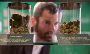 Pick your pot: varieties of weed on display at Altered State.