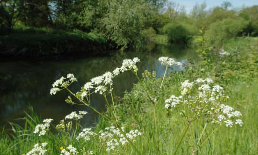 'The new bottlenecks will lead to another new road despoiling the glorious Wensum Valley.'