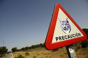 A road sign for lynx in the Doñana national park in south-western Spain