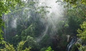 Mist over rainforest