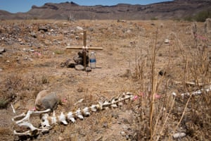 Not forgotten: a makeshift cross marks the spot where a body has been discovered, among the animal bones in the desert.