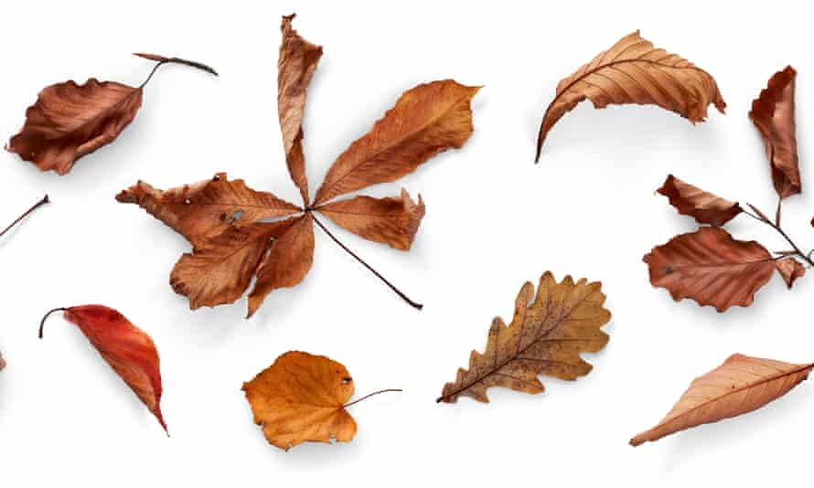 A collection of dried, dry autumn tree leaves