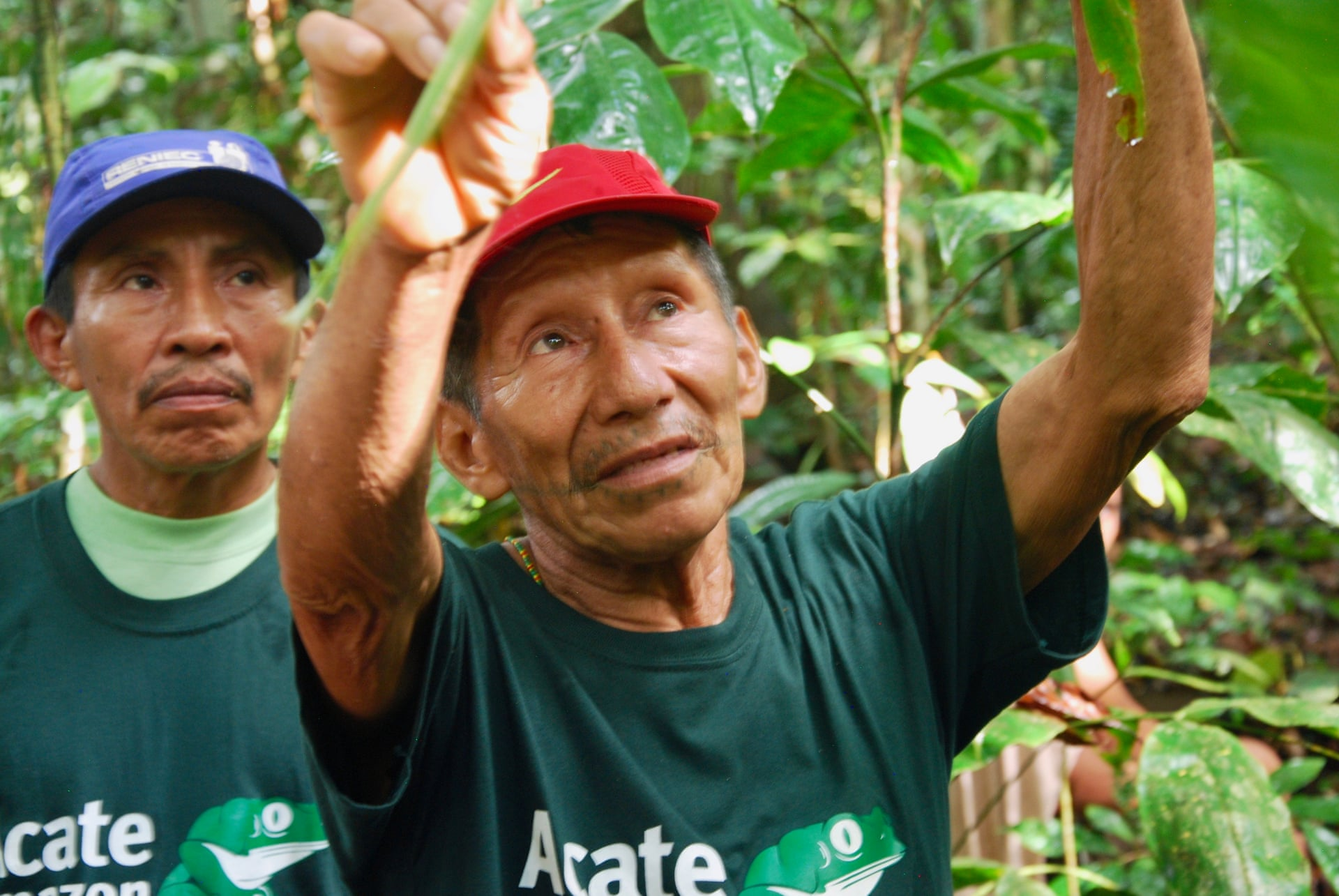 "Alberto Bai, a Matsés traditional healer, in the ""healing forest' near Buenas Lomas Nueva in Peru's Amazon. Photograph: Acate Amazon Conservation"