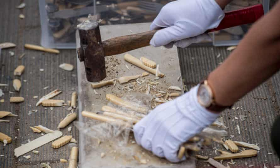 Ivory knives being destroyed