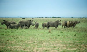 John Hume, the world's biggest rhino rancher who owns around 1,300 of the animals, said he was hoping to sell some of his stock of five tonnes.