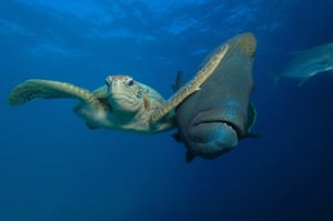 Troy Mayne won the Under the Sea category for his photo of a sea turtle slapping a passing fish in Bacong, Philippines