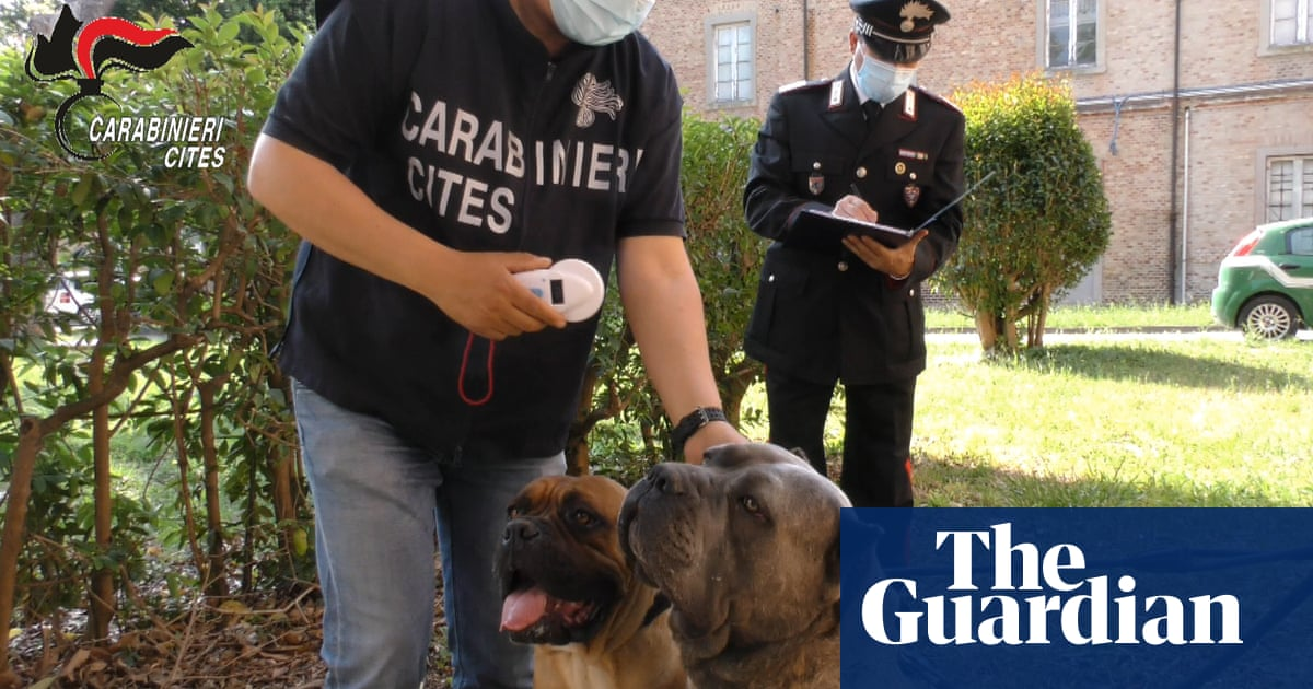 Puppy trafficking ring that allegedly docked ears uncovered in Italy