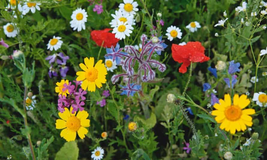 Wild flowers in Riverside Garden.
