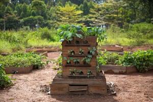 The Vertical Farm Box