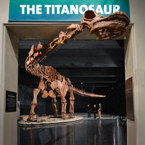 11. Titanosaur overview DF