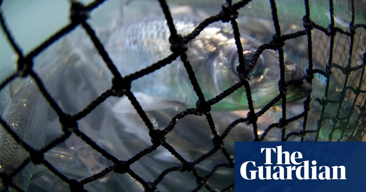 Canada's herring facing 'biological decimation', say First Nations and activists