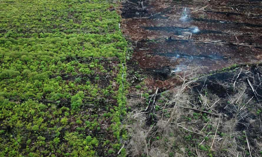 A protected area of the Rawa Singkil wildlife reserve in Trumon, South Aceh is being burnt for a new palm oil plantation