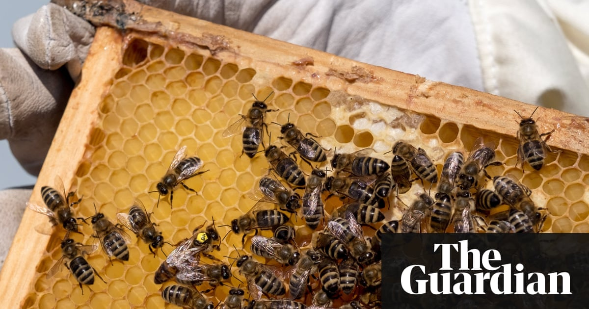 Rival Beekeepers Blamed Over Rise in Hive Heists in Belgium